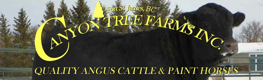 Herd Sires at Canyon Tree Farms Inc